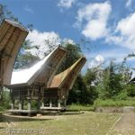 インドネシアスラウェシ島、タナトラジャでコウモリを観察する