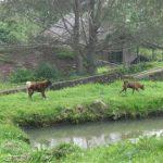 シバヤック山近郊の温泉村、ラジャベルネ村を観光する2
