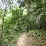 「絶景山」で見るインドネシア最高峰プンチャックジャヤ