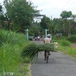 インドネシアの豆腐村「カリサリ(Kali sari)村」の豆腐廃液による汚染への対策